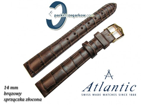 Pasek Atlantic 14mm - Brązowy - Sprzączka złocona